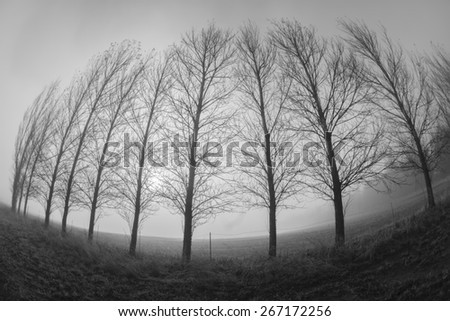 Trees Curved Mist Abstract Vintage\ Mountain farm trees line in mist curved fish-eye lens in black and white vintage.