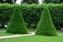 trees cut into the shape of a large regular cone and a flattened sphere. Lenses on the lawn in the garden park are regularly shaped by a hedge trimmer. annual flower beds and trees
