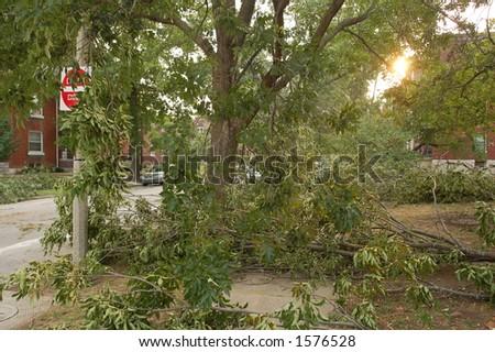 Trees Down on a City Street, St. Louis, Missouri