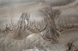 trees - drawing in the sand at low tide