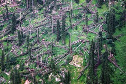 Trees felled by the storm on mountainside