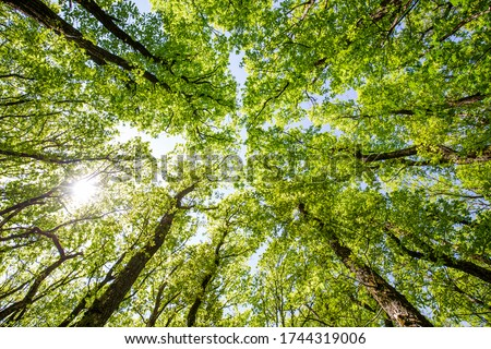 Trees forest  in  summer in Denmark. The Danish green nature Foto stock ©
