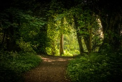 Trees form an archway over a footpath at Wychwood wild gardens