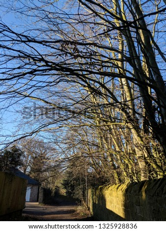 Trees glowing in the bright noon day February winter sun on an old country lane with an ancient stone boundary wall