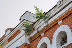 Trees grow on the roof of an old red brick building from the 19th century. Abandoned house with beautiful architecture in the city center. Horizontal photo.