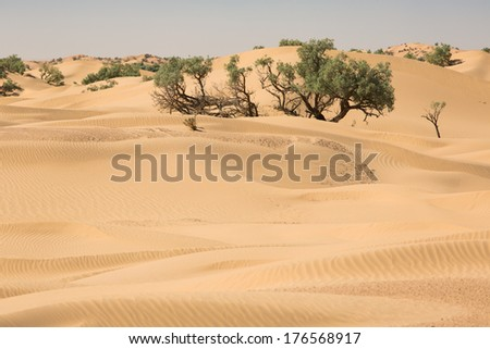 Stock Photo Trees growing in dunes of Sahara desert,