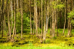 trees growing in the swamp