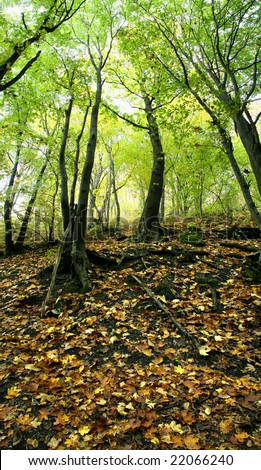 Trees growing on a slope and fallen down leaves on the ground