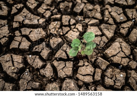 Trees grown in dry, cracked, dry soil in the dry season,global warming