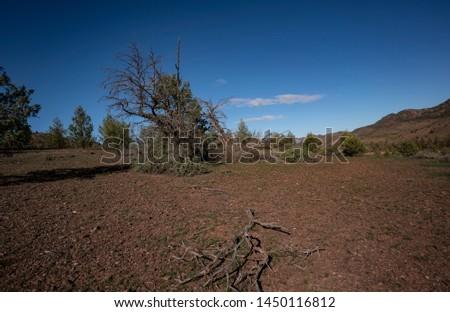 Trees Heysen Ranges Flinders Ranges National Park South Australia #1450116812