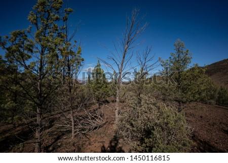 Trees Heysen Ranges Flinders Ranges National Park South Australia #1450116815