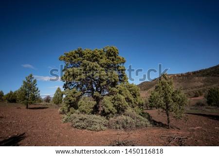 Trees Heysen Ranges Flinders Ranges National Park South Australia #1450116818
