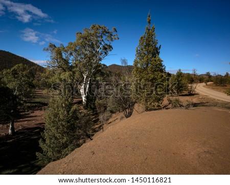 Trees Heysen Ranges Flinders Ranges National Park South Australia #1450116821