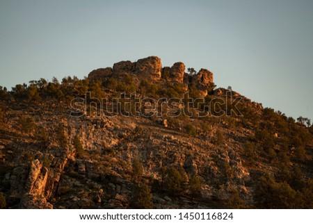 Trees Heysen Ranges Flinders Ranges National Park South Australia #1450116824
