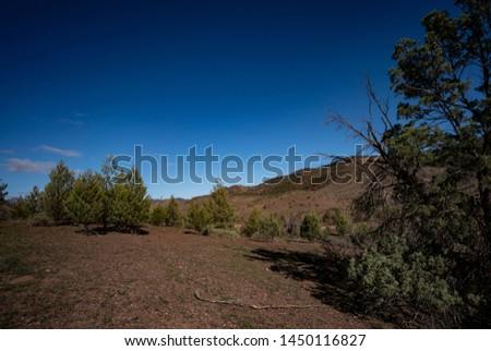 Trees Heysen Ranges Flinders Ranges National Park South Australia #1450116827