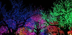 Trees illuminated with multicolored lights