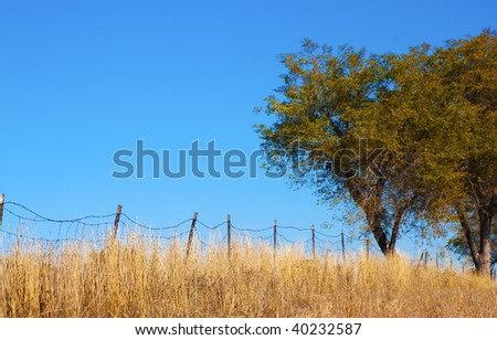 Trees in a field by an old barbed wire fence