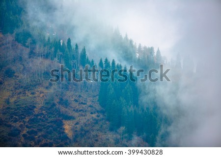 trees in a fog on the mountain