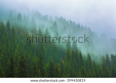 trees in a fog on the mountain,Evergreen Forest