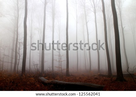Trees in a forest with fog and autumn leaves on the ground