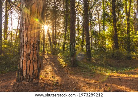 Trees in a magic forest Foto stock ©