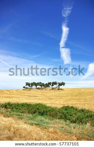 Trees in alentejo field.