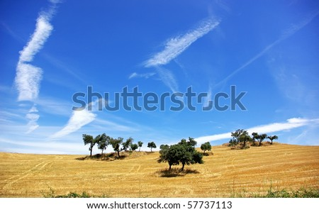 Trees in alentejo field.