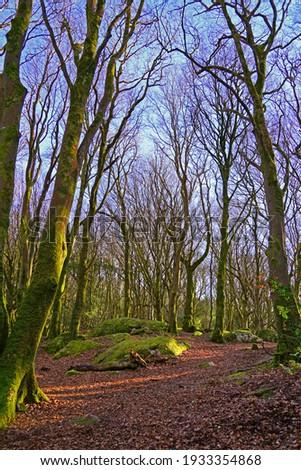 Trees in Barna Woods in Connemara, Galway, Ireland                   Stock fotó ©