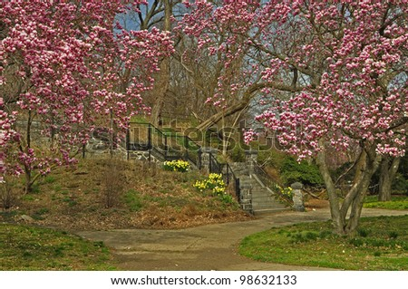 Trees in bloom on a hiking path