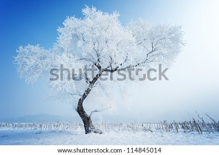trees in frost and landscape in ...