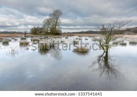 Trees in Frozen Waters, Silverdale Moss Stock fotó ©