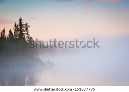 Trees in lake with morning fog