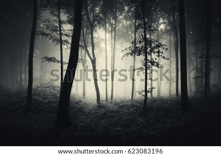 Stock Photo trees in mist forest background