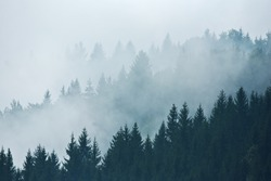 Trees in morning fog