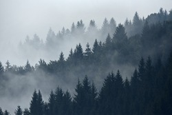 Trees in morning fog