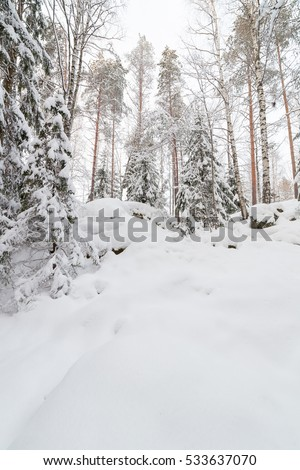 Trees in snow covered forest at winter #533637070