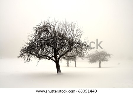 Trees in snow on fog during winter