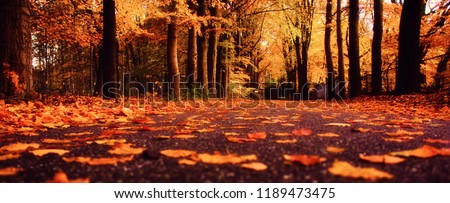 Trees in the fall #1189473475