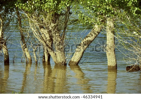 Trees in the flood basin of the river Danube. Hungary.