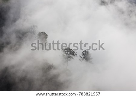 Trees in the fog #783821557