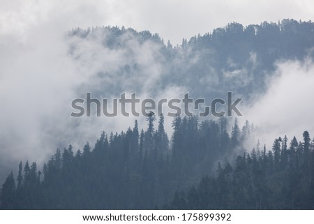 Trees in the fog and clouds, Himalaya