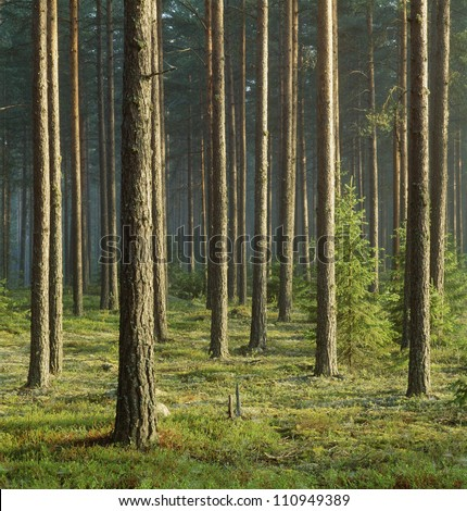 Trees in the forest #110949389