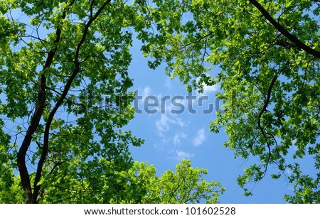 trees in the forest and blue sky