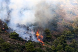 trees in the forest and dry grass in the mountains in northern Israel are burning