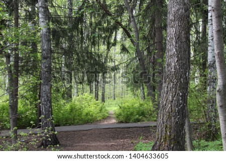 Trees in the forest. Mixed forest. Siberian forest