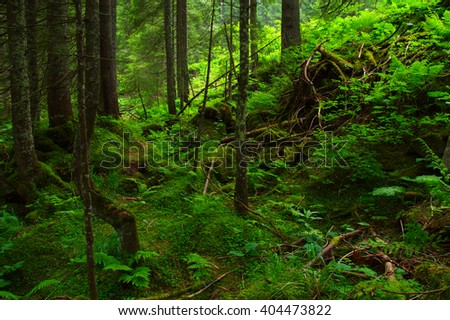 Trees in the green forest  #404473822