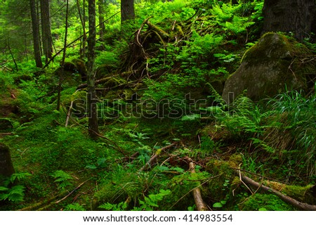 Trees in the green forest  #414983554