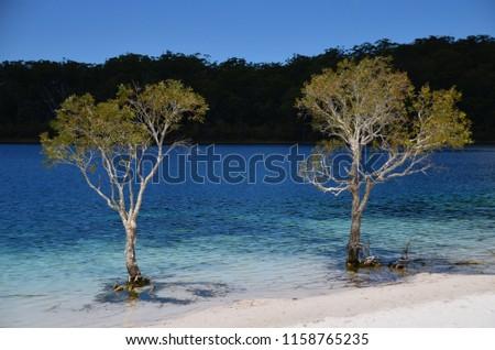 Trees in the lake McKenzie. Lake McKenzie (Boorangoora) is a perched lake on Fraser Island in Queensland, Australia. Stock fotó ©