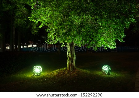 Stock Photo Trees in the park at night