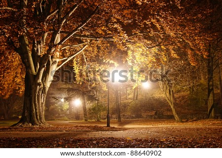 Trees in the park at night #88640902